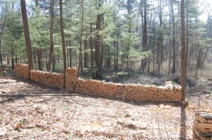 Firewood in Highland St. Forest