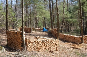 Firewood Stacks (mostly oak and birch)