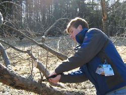 Will, our junior apprentice, pruning our trees