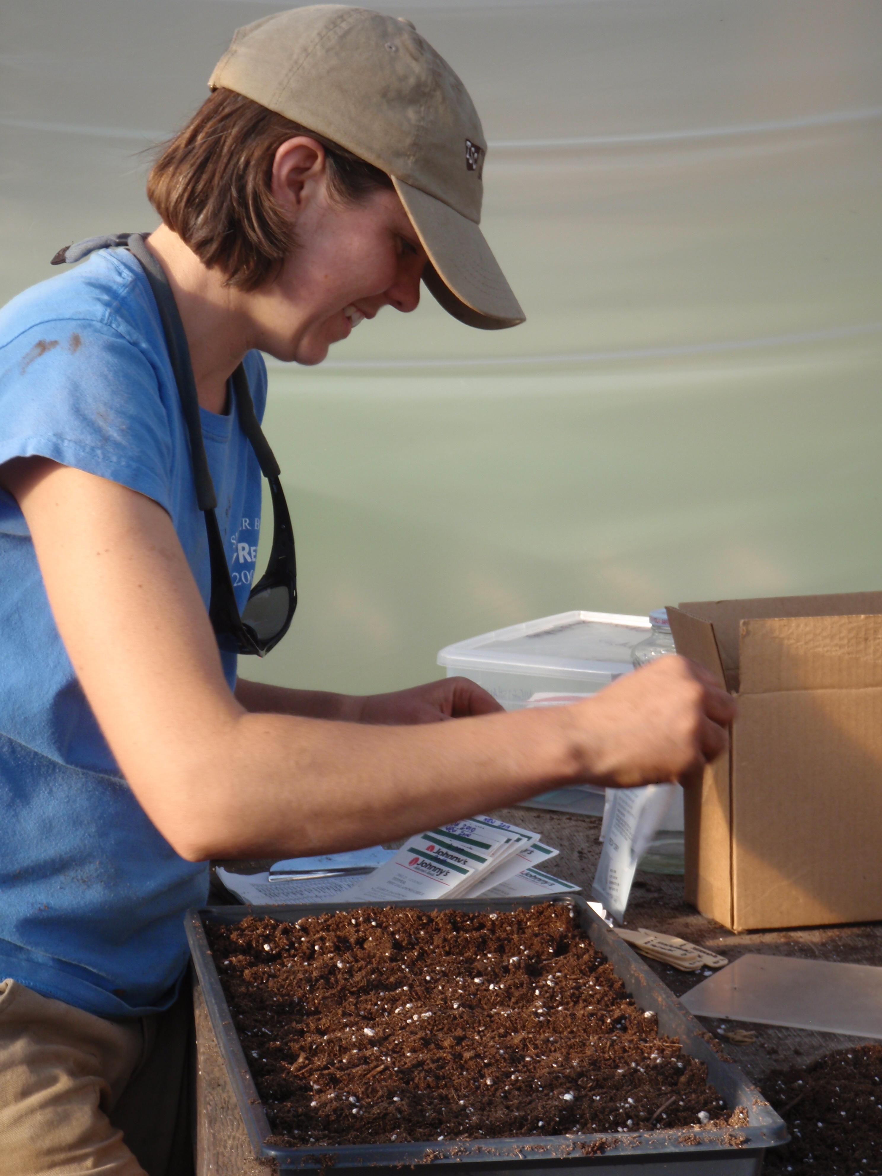 hilary seeding